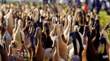 The Duck Patrol