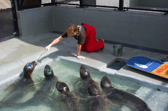 Pintlo - Bill Hunnewell - The Marine Mammal Center