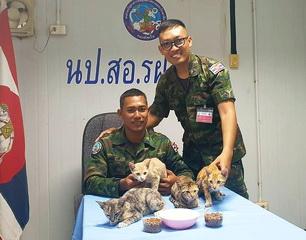 Thatsaphon Saii (seated)and the 4 kittens he saved